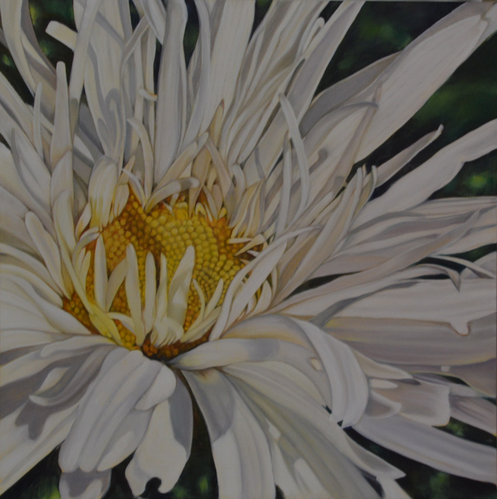 Oil painting Shasta Daisy  by Bev Robertson