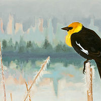 Oil painting The Watcher ( Yellow Headed Black Bird) by Patty Yehle