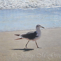 "© Jeffrey M Green. ""Seaside Strutting"", 16"" x 20"", colored pencils. by Jeffrey Green"