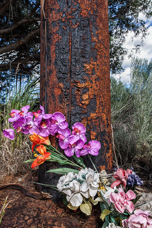 Orchids and Creosote, Descanso on Power Pole, High Road to Taos, NM. 2015 by Jim Holbrook