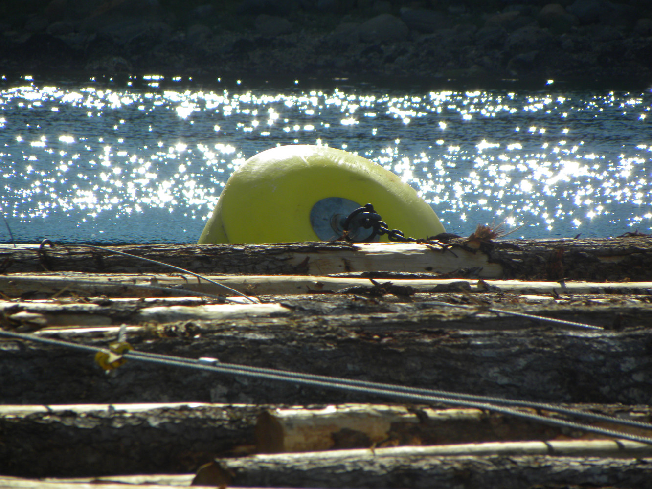 Reflections - Buoy Secures the Log Boom, Sechelt Inlet, B.C. by Dianne  Cuzner