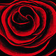 Photography Red Rose 16.5' X 12' Limited Edition Reproduction by Chía Ortegón