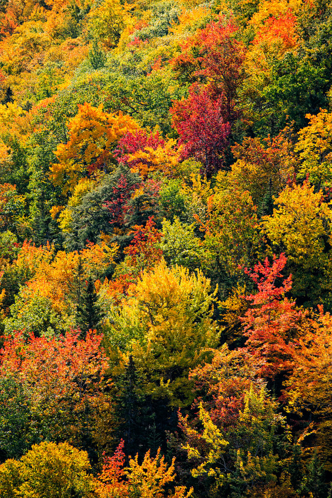 1 Colours on the Cabot Trail by William Kent