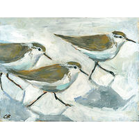 Print Sandpipers C-101 by Cody Blomberg