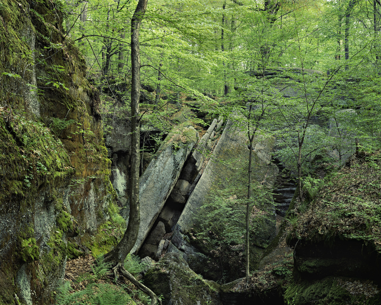 Ledges, Spring Foliage by Wayne Mazorow