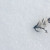 Photography Snow Feather by Rachel Lambert