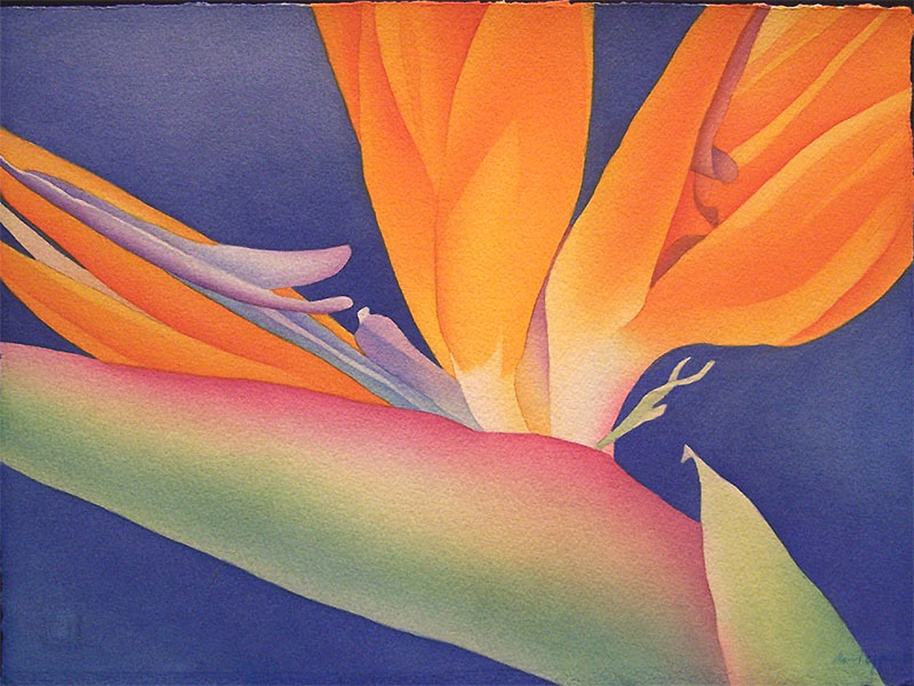 Watercolor Bird of Paradise by Anne Popperwell