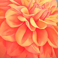 Acrylic painting Dahlia by Anne Popperwell