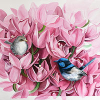Fairy Wrens and Orchids by Debbie Hart