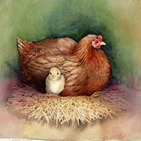 Watercolor Hen with Chick by Betty Ann  Medeiros