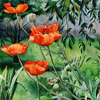 Watercolor Poppies by Betty Ann  Medeiros