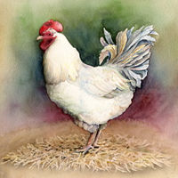 Watercolor White Rooster by Betty Ann  Medeiros