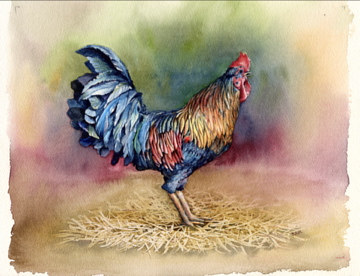 Watercolor Colorful Rooster by Betty Ann  Medeiros