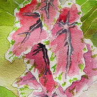 Watercolor IMG_0574 by Robert Mcelwee