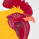 Photography Rooster 3 by Lisa Lackey
