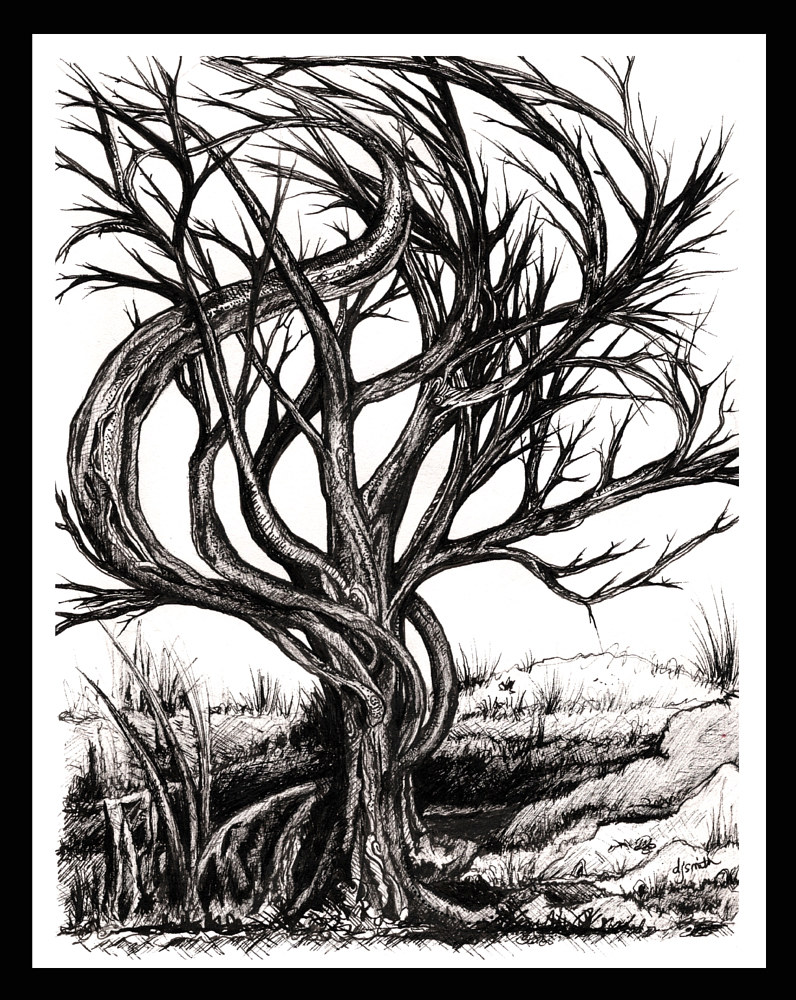 Print Twisted Tree by Danielle Scott