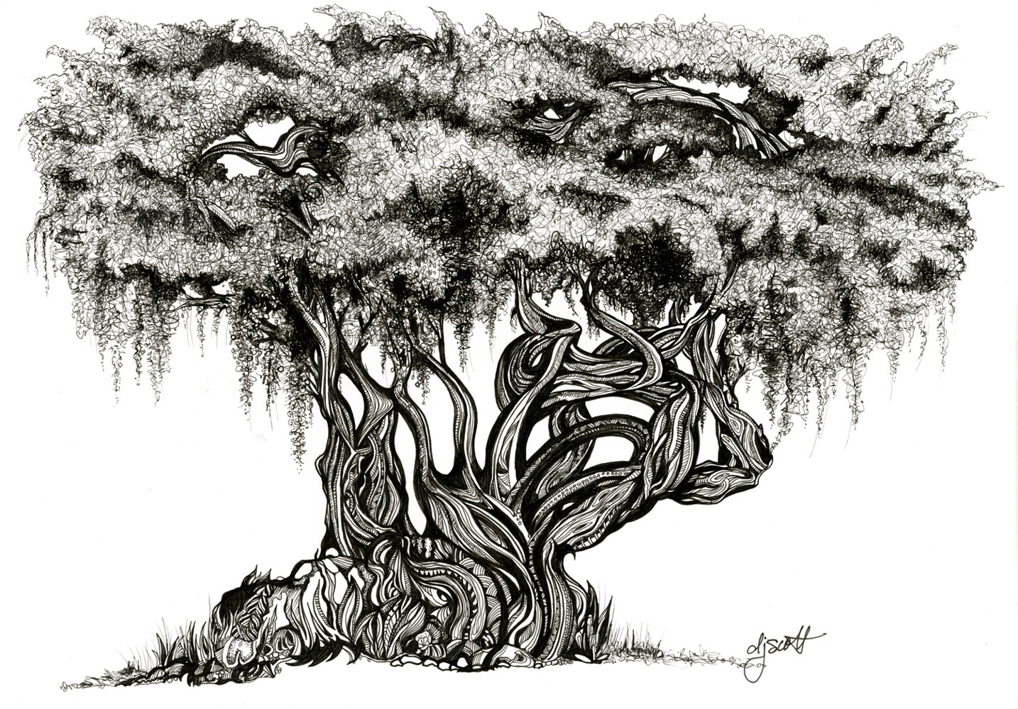 Drawing Florida Oak Tree by Danielle Scott