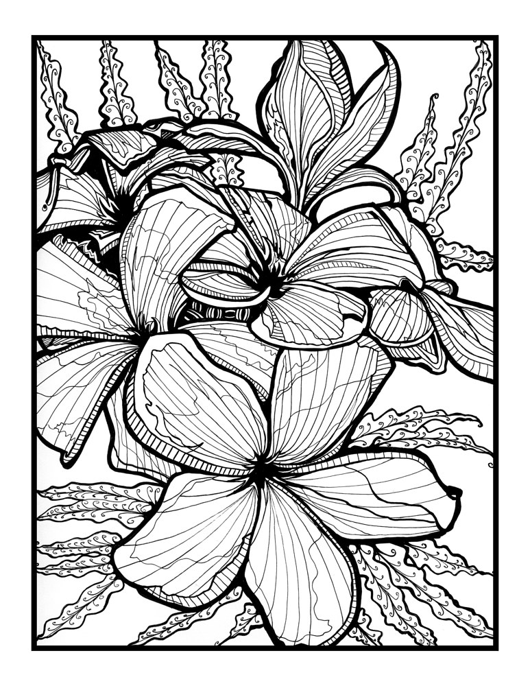 Drawing Celadine by Danielle Scott