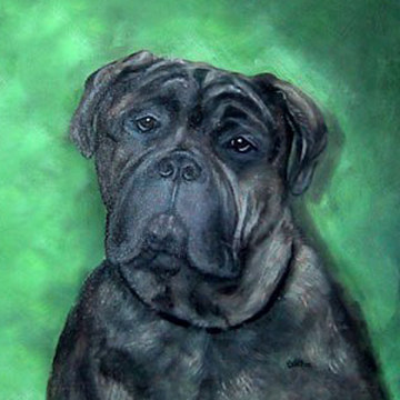 Acrylic painting Brutus by Sally Adams