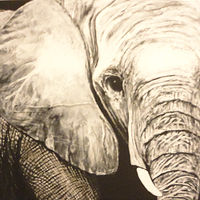 Acrylic painting Elephant by Elizabeth Mercer