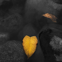 Leaf In Rocks  by Jim Friesen