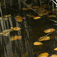 Reeds & Leaves by Jim Friesen