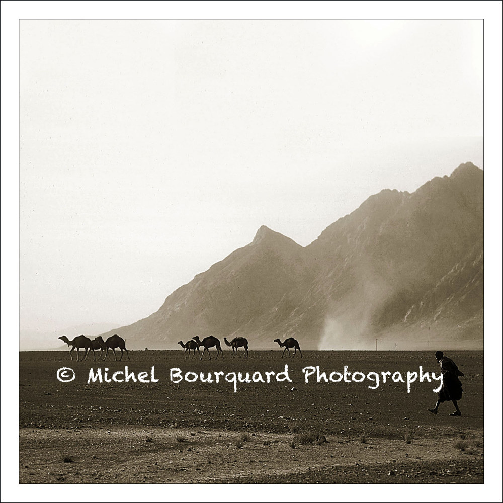 Caravan in Afganistan-between Kabul–Kandahar by Michel Bourquard