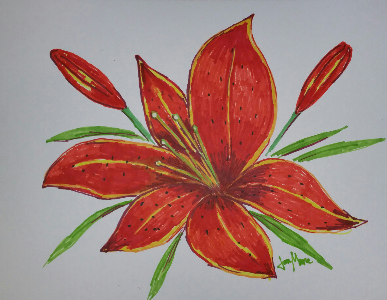 Drawing Tiger Lilies by Jan Wirth
