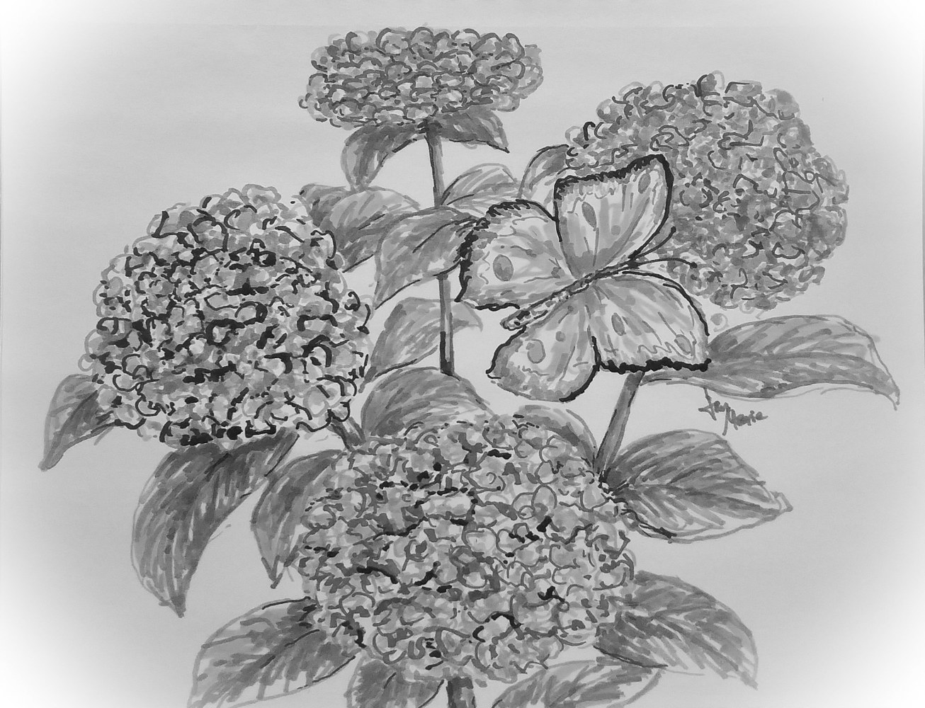 Hydrangeas Gray Scale by Jan Wirth