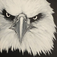 Acrylic painting Eagle by Elizabeth Mercer