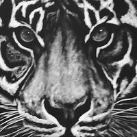 Painting Tiger Face by Elizabeth Mercer