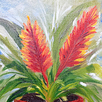 Oil painting  Bromelaid by Barbara Haviland