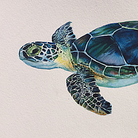Watercolor Turtle by Betty Ann  Medeiros