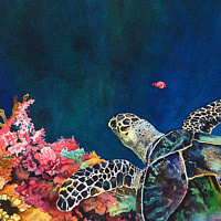 Watercolor Turtle and Coral Reef by Betty Ann  Medeiros