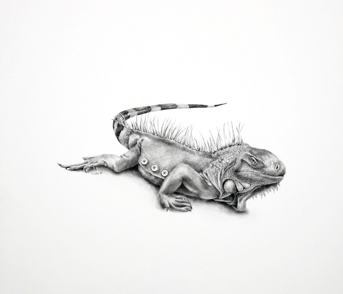 Drawing Three Button Lizard by Ellen Cornett