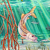 Oil painting Snook by Richard Ficker