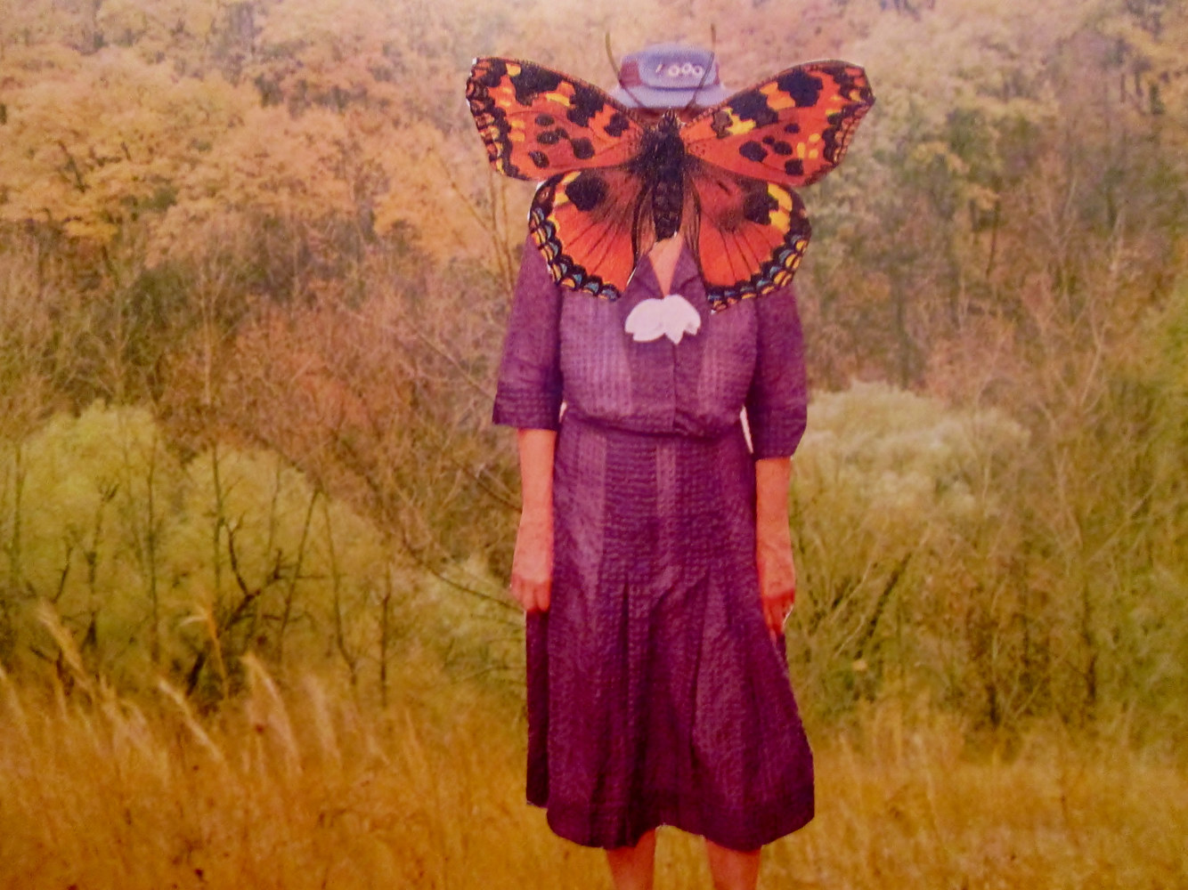 The Frumpy Butterfly Lady  by Jo Ann Tunnell Muench