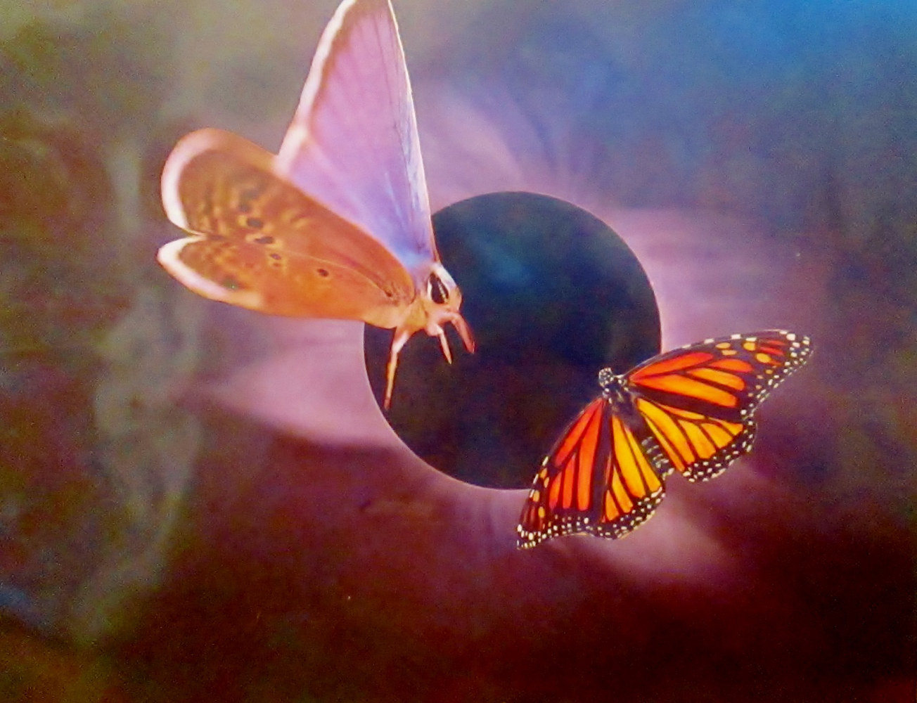 Butterflies in Space  by Jo Ann Tunnell Muench