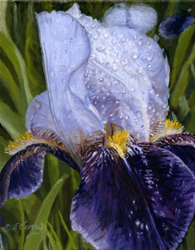 Oil painting FLOWER by Tom Furey by George Servais
