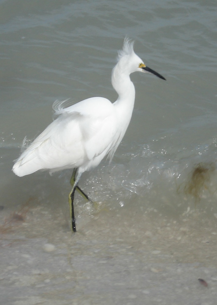 Photography Egret by Joan Morris