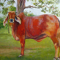 Oil painting  Bessie  by Barbara Haviland