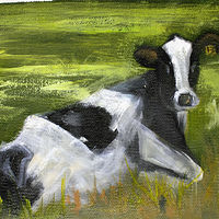 Oil painting Resting  Black and White Cow by Barbara Haviland