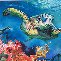 Watercolor  Loggerhead Turtle by Betty Ann  Medeiros