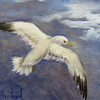 Oil painting  Flying Sea Gull by Barbara Haviland