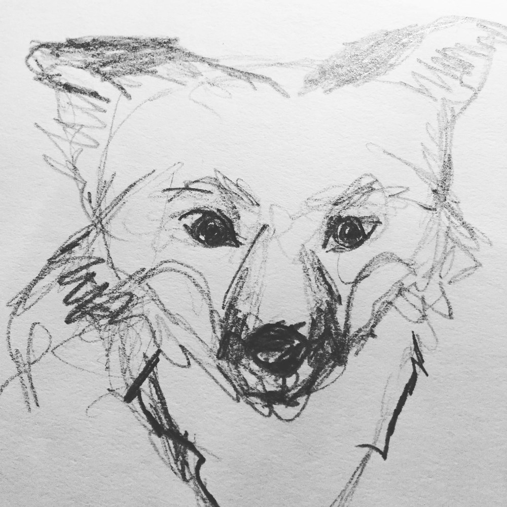 Drawing Fox sketch by Barb Martel