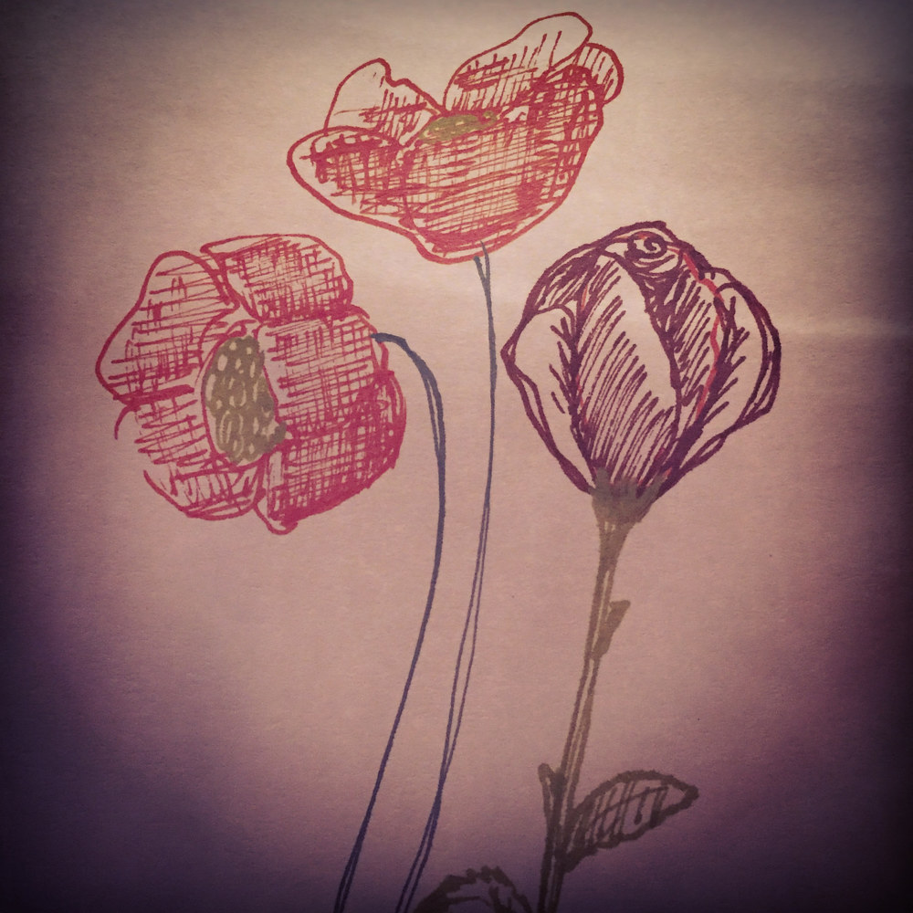 Drawing Flower sketch by Barb Martel