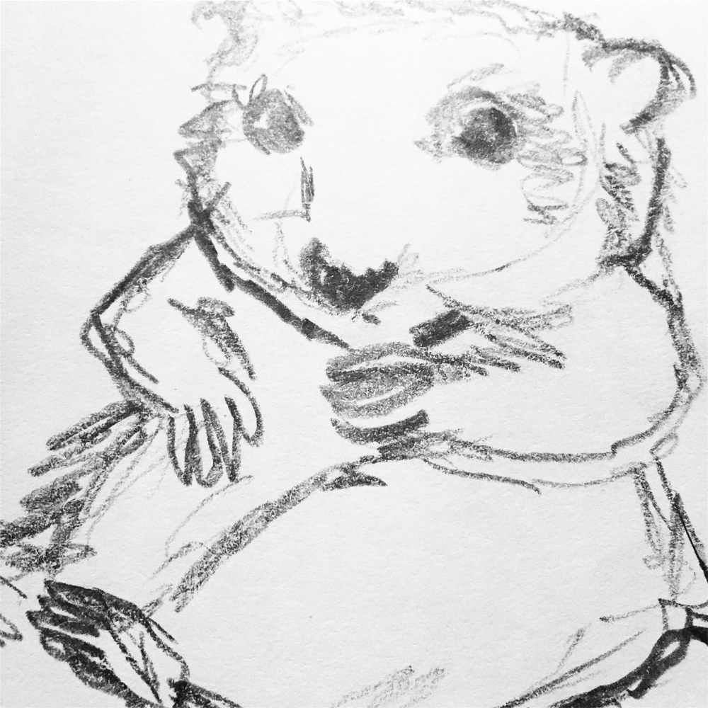 Drawing Hamster sketch by Barb Martel