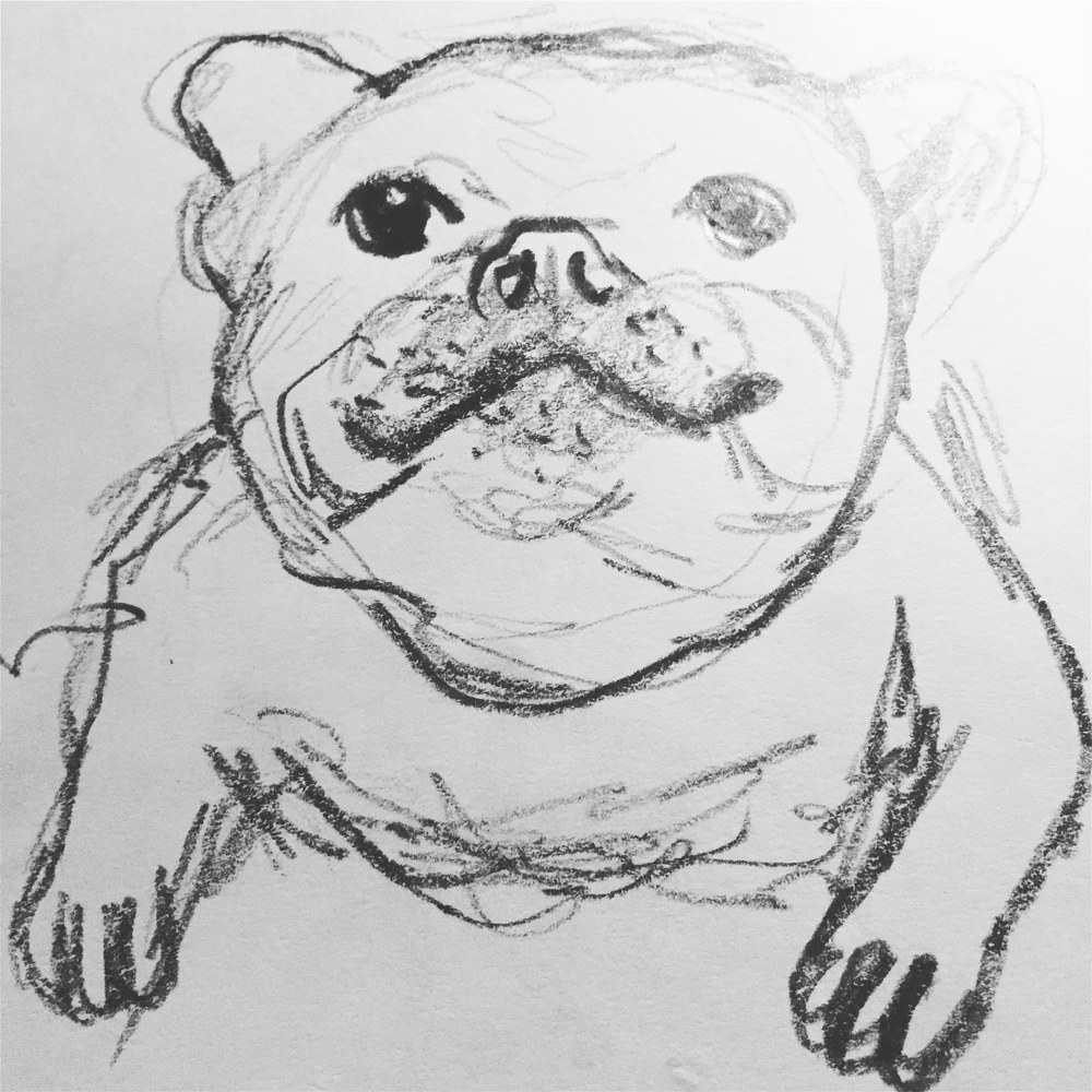 Drawing Puppy sketch by Barb Martel