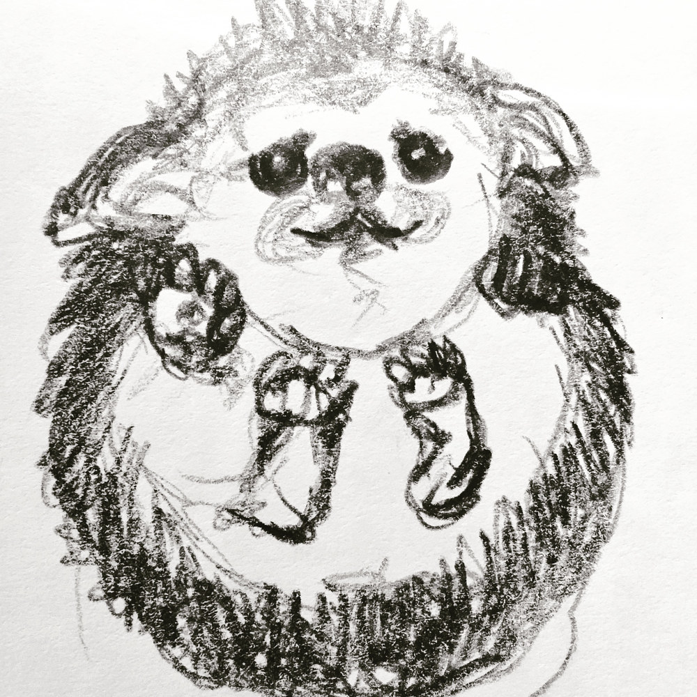 Drawing Hedgehog sketch by Barb Martel