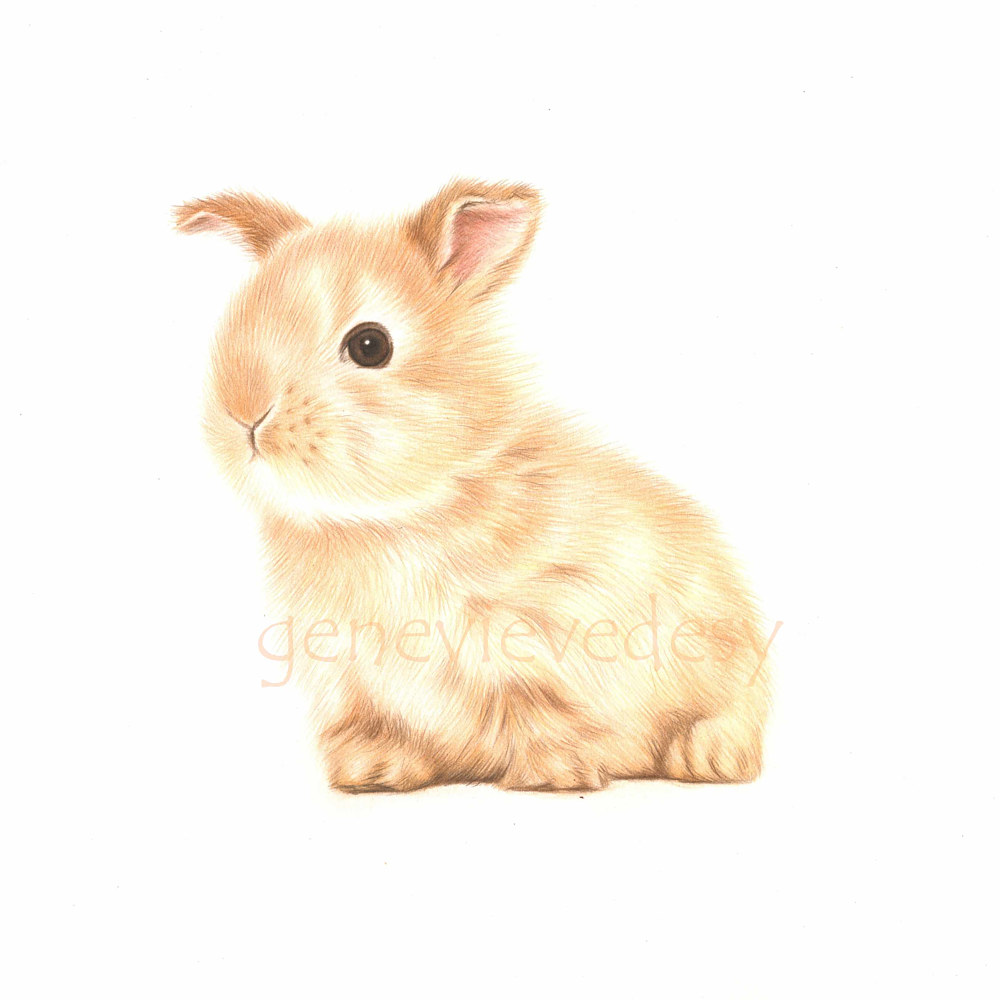 2015 11x11 lapin assis fond blanc_copyright by Genevieve Desy